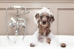 Banho e Tosa Completo