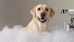 Banho e Tosa Higiênica